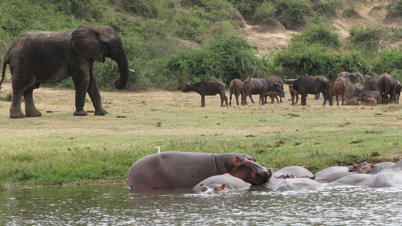 ELEPHANTS AND HIPPOS